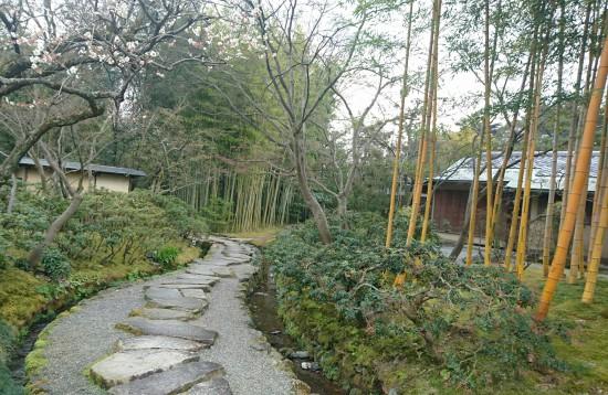 松花堂庭園の竹その2