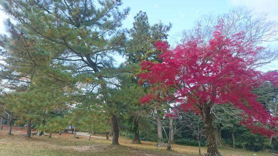 伊賀上野城 公園内の紅葉