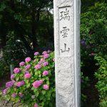 幸田町の本光寺紫陽花まつりに行きました 紫陽花がちょうど見ごろです